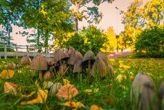 Ένα μικρό μπάλωμα των φρέσκων μανιταριών Στοκ Εικόνα