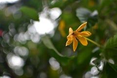 Ένα μικρό λουλούδι Στοκ εικόνα με δικαίωμα ελεύθερης χρήσης