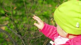Ένα μικρό παιδί αγγίζει ήπια έναν κλάδο δέντρων στο πάρκο της φωτεινής και ηλιόλουστης στις αρχές ημέρας φθινοπώρου φιλμ μικρού μήκους