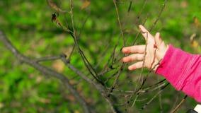 Ένα μικρό παιδί αγγίζει ήπια έναν κλάδο δέντρων στο πάρκο της φωτεινής και ηλιόλουστης στις αρχές ημέρας φθινοπώρου απόθεμα βίντεο