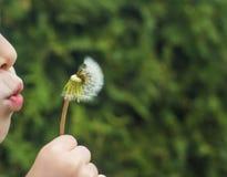 Ένα μικρό παιδί φυσά μακριά μια χνουδωτή πικραλίδα στοκ φωτογραφία