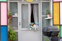 Ένα μικρό παχύ σκυλί αναρριχείται μέσω ενός παραθύρου σε ένα ζωηρόχρωμο σπίτι, τα παλαιά τέταρτα Jaffa, Ισραήλ Στοκ φωτογραφία με δικαίωμα ελεύθερης χρήσης