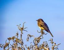 Ένα μικρό πουλί θαλασσίως Στοκ Εικόνα
