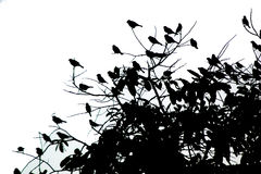 Ένα μικρό πουλί αρκετοί Σύλληψη στους κλάδους Η εικόνα του Μαύρου Στοκ Εικόνες