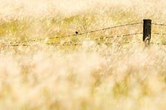 Ένα μικρό πουλί Στοκ Εικόνες