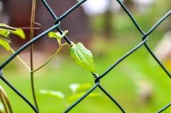 Ένα μικρό πράσινο φύλλο στη σχάρα στοκ φωτογραφία με δικαίωμα ελεύθερης χρήσης
