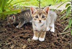 Ένα μικρό ριγωτό γατάκι στη χλόη tropics στοκ φωτογραφίες με δικαίωμα ελεύθερης χρήσης