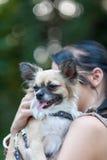 Ένα μικρό σκυλί ΙΙΙ Στοκ Εικόνες