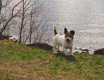 Ένα μικρό σκυλί στέκεται στην ακτή με το υπόβαθρο θάλασσας στη μαλακή εστίαση στοκ φωτογραφίες