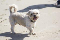 Ένα μικρό σκυλί στοκ εικόνες