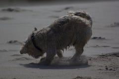 Ένα μικρό σκυλί στοκ φωτογραφία με δικαίωμα ελεύθερης χρήσης