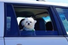 Ένα μικρό σκυλάκι Στοκ φωτογραφίες με δικαίωμα ελεύθερης χρήσης