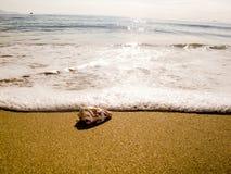 Ένα μικρό ωκεάνιο κοχύλι Στοκ εικόνα με δικαίωμα ελεύθερης χρήσης