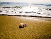 Ένα μικρό ωκεάνιο κοχύλι Στοκ φωτογραφίες με δικαίωμα ελεύθερης χρήσης