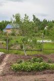 Ένα μικρό Apple-δέντρο αυξάνεται Στοκ φωτογραφία με δικαίωμα ελεύθερης χρήσης
