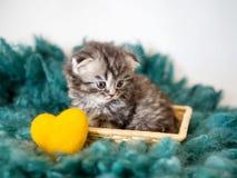 Ένα μικρό thoroughbred γατάκι και μια κίτρινη κινηματογράφηση σε πρώτο πλάνο καρδιών Στοκ φωτογραφίες με δικαίωμα ελεύθερης χρήσης