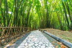 Ένα μονοπάτι σε ένα δάσος μπαμπού στην Κίνα Στοκ φωτογραφία με δικαίωμα ελεύθερης χρήσης