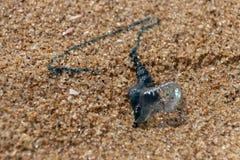 Ένα μπλε μπουκάλι στην παραλία στοκ φωτογραφία με δικαίωμα ελεύθερης χρήσης