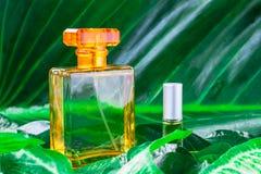 Ένα μπουκάλι του αρώματος και του φυσικού αρώματος σε ένα φυλλώδες υπόβαθρο στοκ εικόνες