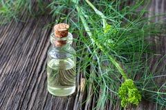 Ένα μπουκάλι του πετρελαίου σπόρου άνηθου με τη φρέσκια άνθιση Anethum graveolens Στοκ Φωτογραφία