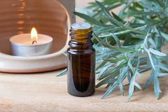 Ένα μπουκάλι wormwood του ουσιαστικού πετρελαίου με φρέσκο Artemisia Absinthi Στοκ Εικόνα