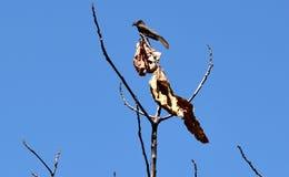 Ένα μυστηριώδεις δέντρο και μια άγρια φύση στο κατώφλι μου Στοκ φωτογραφία με δικαίωμα ελεύθερης χρήσης