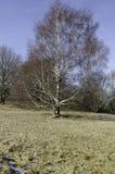 Ένα μόνο δέντρο στον τομέα Στοκ Εικόνες