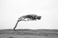 Ένα μόνο απομονωμένο δέντρο σε γραπτό στοκ φωτογραφίες
