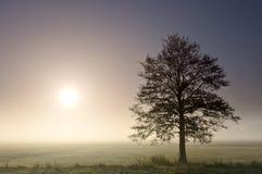 Ένα μόνο δέντρο σε μια υδρονέφωση ξημερωμάτων και με τον ήλιο στοκ εικόνες