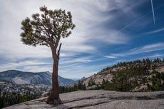 Ένα μόνο δέντρο στέκεται στην κοιλάδα θανάτου Στοκ Εικόνες