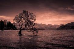 Ένα μόνο δέντρο στη λίμνη Wanaka Στοκ Φωτογραφίες