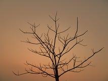 Ένα μόνο δέντρο Στοκ εικόνα με δικαίωμα ελεύθερης χρήσης