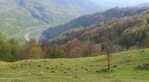 Ένα μόνο ξηρό δέντρο σε έναν Καρπάθιο λόφο στοκ εικόνα