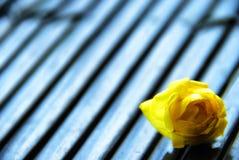 Ένα μόνο Yellow Rose στοκ εικόνα με δικαίωμα ελεύθερης χρήσης