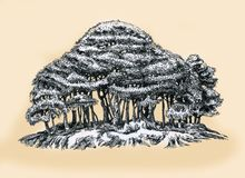 Ένα νέο άλσος των δέντρων Στοκ εικόνα με δικαίωμα ελεύθερης χρήσης