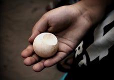 Ένα νέο αγόρι που κρατά ένα αυγό χελωνών στοκ φωτογραφία