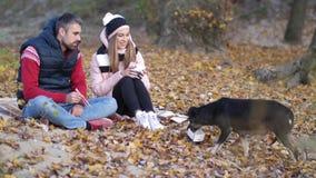 Ένα νέο ζεύγος στην παραλία ταΐζει το σκυλί με τα κινεζικά τρόφιμα Η άμμος φθινοπωρινή μελαγχολία φύλλων ημέρας κίτρινη Φθινόπωρο απόθεμα βίντεο