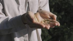 Ένα νέο κορίτσι που φυσά σε ετοιμότητα της με το χρυσό λαμπιρίζει στο υπόβαθρο της φύσης απόθεμα βίντεο