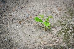 Ένα νέο νέο φυτό αρχής αυξάνεται σε ένα ξηρό χώμα Στοκ φωτογραφία με δικαίωμα ελεύθερης χρήσης