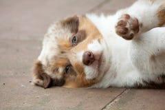 Ένα νέο σκυλί που βρίσκεται στην πλευρά Στοκ φωτογραφία με δικαίωμα ελεύθερης χρήσης