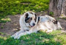 Ένα να βρεθεί παλαιό σκυλί στοκ φωτογραφία με δικαίωμα ελεύθερης χρήσης