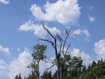 Ένα νεκρό δέντρο που στέκεται ακόμα στοκ φωτογραφίες