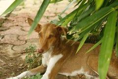 Ένα ντροπαλό σκυλί οδών καμερών Στοκ Εικόνα