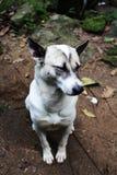Ένα νυσταλέο σκυλί Στοκ Φωτογραφίες