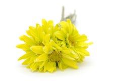Ένα νυφικό λουλούδι μαργαριτών στοκ εικόνα