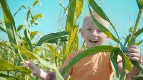 Ένα ξανθό αγόρι σε μια πορτοκαλιά μπλούζα παίζει cornfield, ένα παιδί κρύβει μέσα πίσω από τους μίσχους καλαμποκιού φιλμ μικρού μήκους