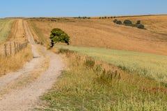 Ένα ξηρό τοπίο του Σάσσεξ στοκ εικόνα με δικαίωμα ελεύθερης χρήσης