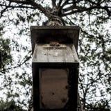 Ένα ξύλινο σπίτι πουλιών που κρεμά στο δέντρο στοκ εικόνα με δικαίωμα ελεύθερης χρήσης