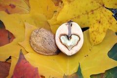 Ένα ξύλο καρυδιάς που διαμορφώνεται όπως μια καρδιά Στοκ Εικόνα