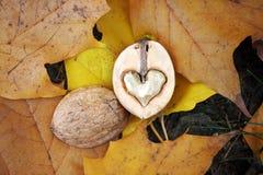 Ένα ξύλο καρυδιάς που διαμορφώνεται όπως μια καρδιά Στοκ φωτογραφία με δικαίωμα ελεύθερης χρήσης